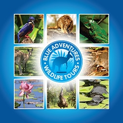 Blue Adventures wildlife tours logo