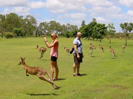 Kangaroos on our Port Douglas wildlife habitat tour